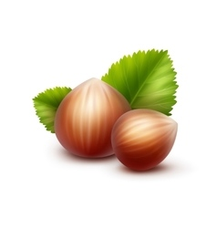 Full Unpeeled Hazelnuts with Leaves Isolated vector image