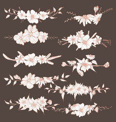 hand drawn flowers botanical decorative element vector image