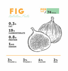 nutrition facts fig hand draw sketch vector image