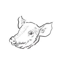 Sketch pig icon vector