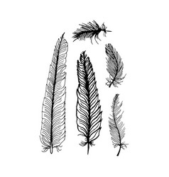 hand draw set of feathers on a white background vector image
