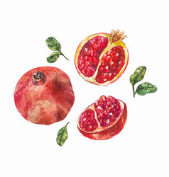 set of watercolor pomegranates a whole fruit and vector image