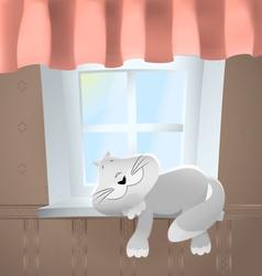Animals Cat in front of window vector