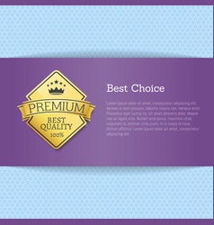 best choice brochure design place for text label vector image