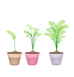 Cereal Plants or Ferns in Terracotta Flower Pots vector image