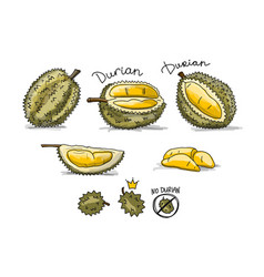 Durian sketch for your design vector