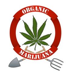 Organic marijuna-cannabis vector image