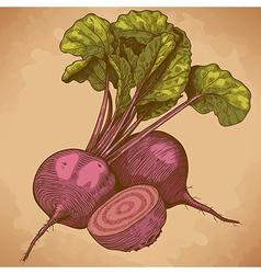 Engraving beet retro vector