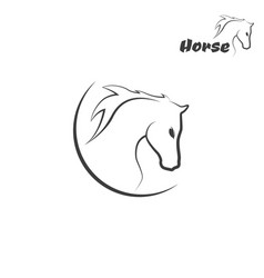 Head horse logo vector