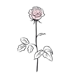 Pink rose flower isolated on the white background vector