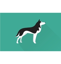 Siberian husky icon vector