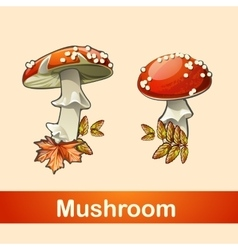 Two fly agaric closeup with a different side vector image