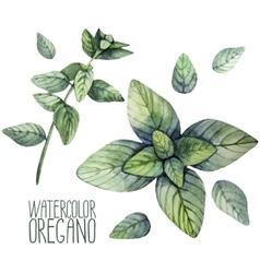 Watercolor oregano set vector