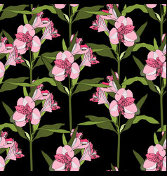 Background with line pink alstroemeria lilies vector