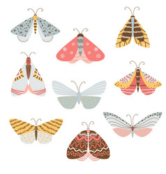 beautiful multicolored butterflies and moths with vector image
