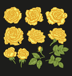 Big set with yellow rose flowers and leaves in vector