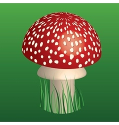fly-agaric vector image