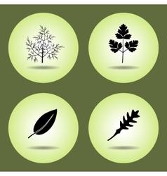 Food herbs set Parsley laurel rucola dill vector image vector image