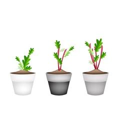 Radish Or Beet Plant in Ceramic Flower Pots vector