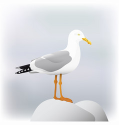 Seagull bird vector