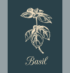 Basil branch on dark vector
