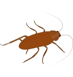 Cockroach icon cartoon insect isolated on vector image