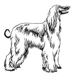 Decorative standing portrait afghan greyhound vector