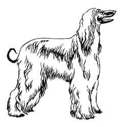 Decorative standing portrait of afghan greyhound vector