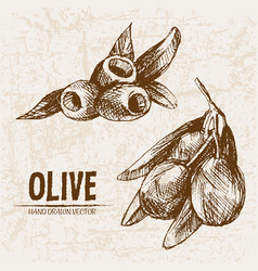 digital detailed line art olive vector image