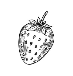 strawberry in engraving style design element vector image