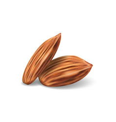 Template with almonds for packaging design vector