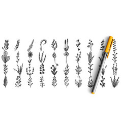 wild plants doodle set vector image