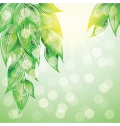 Green leaves on colorful background vector image vector image