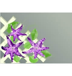 clematis on fence vector image