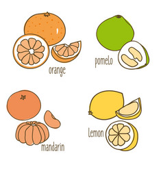Colored drawing citrus fruits collection vector