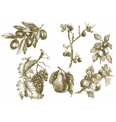 Plants - fruits vector