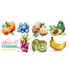 watercolor fruits set collection kiwi vector image