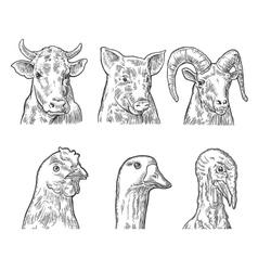 Farm animals icon set Heads pig cow chicken vector image