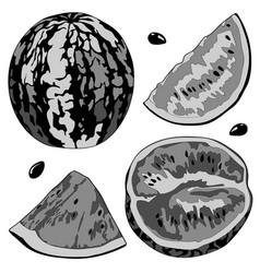 a watermelon half vector image