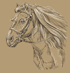 Horse portrait brown 21 vector