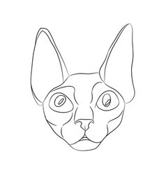 cat portrait lines vector image