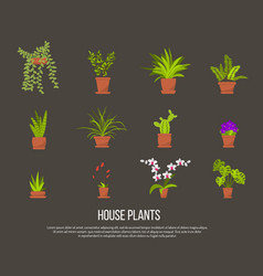 collection indoor house plants vector image