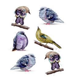 Cute birds watercolor colorful painted vector