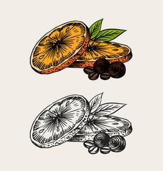 Orange slices summer fruit engraved hand drawn vector
