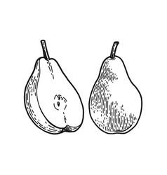 Poire engraved sketch vector