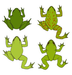 set color with water river frogs vector image