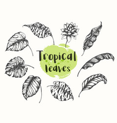 summer tropical floral design elements vector image