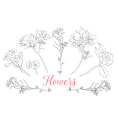 wild rose flowers drawing and sketch with line-art vector image