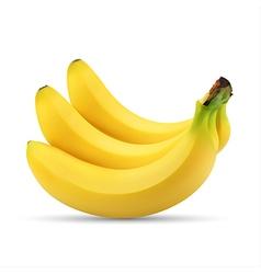 Realistic of bunch of bananas vector image