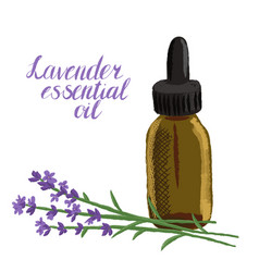 drawing lavender essential oil vector image